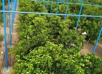 ساخت گلخانه در شیپور-عکس کوچک