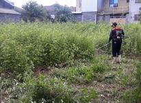 کارگر ماهر +دستگاه علف تراشی و چمن زنی و هرس در رشت و حومه در شیپور-عکس کوچک
