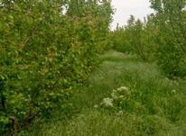 ۴۵۰۰ متر باغ با بهر ۱۳۰ بهمراه سند در شیپور-عکس کوچک