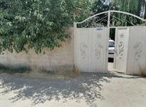 باغچه 15ساله در شیپور-عکس کوچک