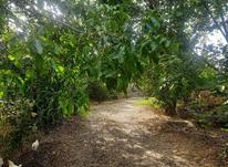 سمپاشی درخت در شیپور-عکس کوچک