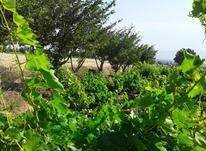باغ و زمین کشاورزی  در شیپور-عکس کوچک