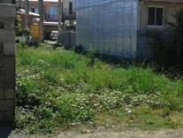 فروش زمین مسکونی 200 متر در رضوانشهر در شیپور