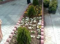 باغبانی و سمپاشی در شیپور-عکس کوچک