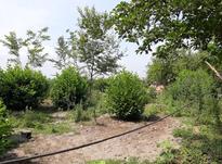 زمین مسکونی 1000 متر در زیباکنار در شیپور-عکس کوچک