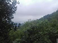 زمین ویودار 1200 متر در شیپور-عکس کوچک