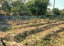 250متر زمین جهت ساخت. مسکونی و تجاری در شیپور-عکس کوچک