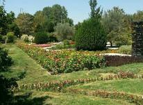باغبان هستم در شیپور-عکس کوچک