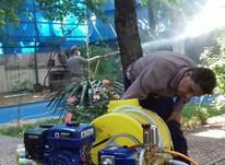 باغبانی و سمپاشی تمام نقاط تهران در شیپور-عکس کوچک