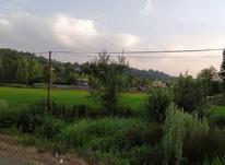 900متر زمین مسکونی با پروانه ساخت در چلک لاهیجان در شیپور-عکس کوچک
