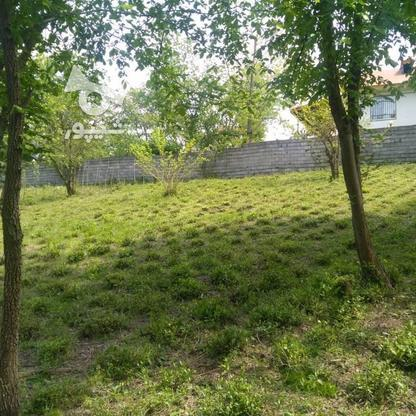 1045متر زمین سنددار مسکونی پشت کارخانه چای ازبرم   در گروه خرید و فروش املاک در گیلان در شیپور-عکس4