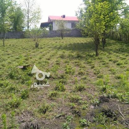 1045متر زمین سنددار مسکونی پشت کارخانه چای ازبرم   در گروه خرید و فروش املاک در گیلان در شیپور-عکس10
