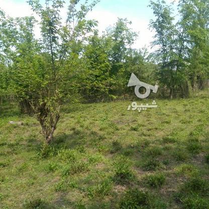 1045متر زمین سنددار مسکونی پشت کارخانه چای ازبرم   در گروه خرید و فروش املاک در گیلان در شیپور-عکس5