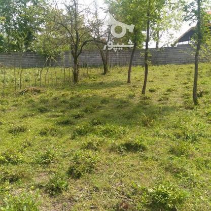 1045متر زمین سنددار مسکونی پشت کارخانه چای ازبرم   در گروه خرید و فروش املاک در گیلان در شیپور-عکس7