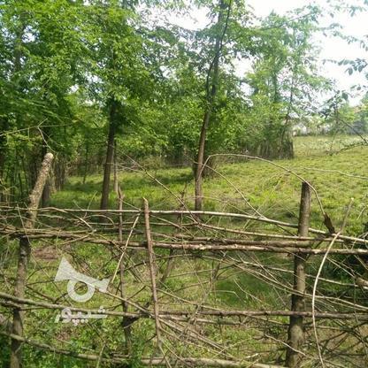 1045متر زمین سنددار مسکونی پشت کارخانه چای ازبرم   در گروه خرید و فروش املاک در گیلان در شیپور-عکس11