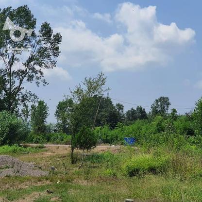 1500 متر زمین مسکونی در حاج سلیم محله در گروه خرید و فروش املاک در گیلان در شیپور-عکس6