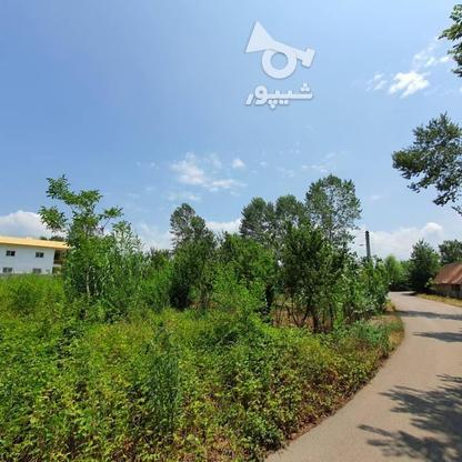 1500 متر زمین مسکونی در حاج سلیم محله در گروه خرید و فروش املاک در گیلان در شیپور-عکس3