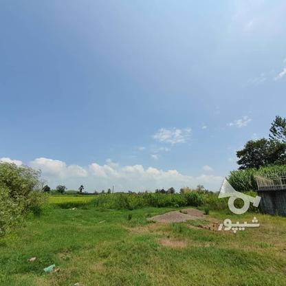 1500 متر زمین مسکونی در حاج سلیم محله در گروه خرید و فروش املاک در گیلان در شیپور-عکس9