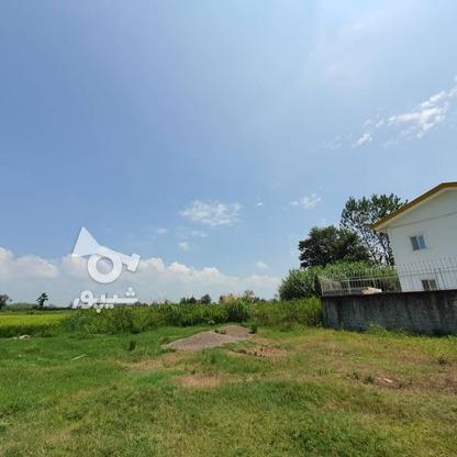 1500 متر زمین مسکونی در حاج سلیم محله در گروه خرید و فروش املاک در گیلان در شیپور-عکس7