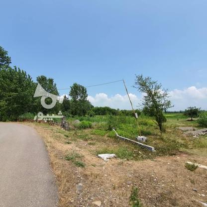 1500 متر زمین مسکونی در حاج سلیم محله در گروه خرید و فروش املاک در گیلان در شیپور-عکس2