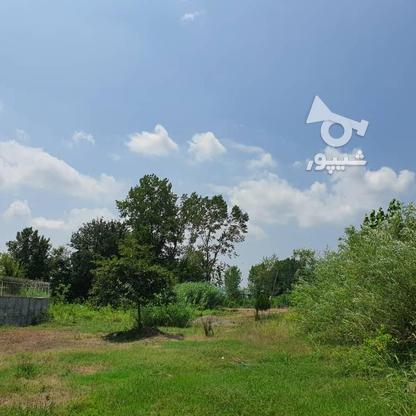 1500 متر زمین مسکونی در حاج سلیم محله در گروه خرید و فروش املاک در گیلان در شیپور-عکس4