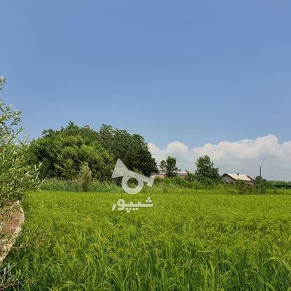 1500 متر زمین مسکونی در حاج سلیم محله در گروه خرید و فروش املاک در گیلان در شیپور-عکس11