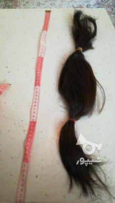 موی طبیعی سالم در گروه خرید و فروش لوازم شخصی در مازندران در شیپور-عکس1
