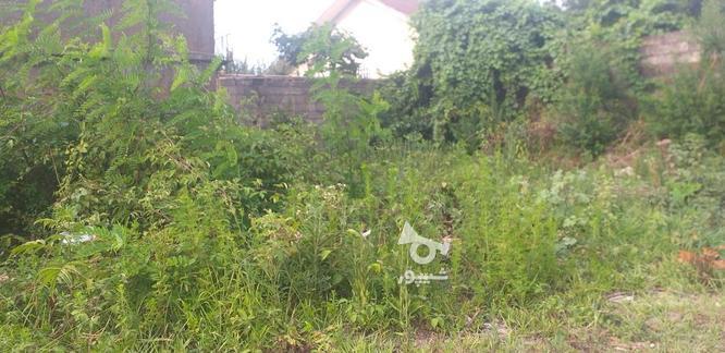 فروش 230متر زمین مسکونی دورمحصور درروستای نزدیک شهر در گروه خرید و فروش املاک در گیلان در شیپور-عکس1