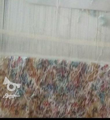 فرش دستباف تبریز در گروه خرید و فروش لوازم خانگی در آذربایجان شرقی در شیپور-عکس1