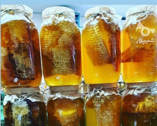 عسل وحشی طبیعی گرده گل ژله رویال پنیرو روغن حیوانی  در گروه خرید و فروش خدمات و کسب و کار در تهران در شیپور-عکس3