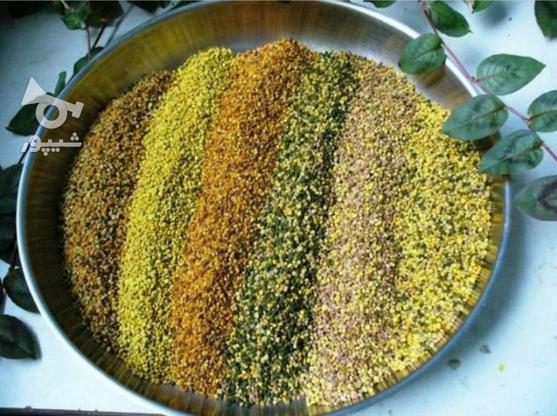 عسل وحشی طبیعی گرده گل ژله رویال پنیرو روغن حیوانی  در گروه خرید و فروش خدمات و کسب و کار در تهران در شیپور-عکس5
