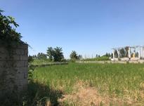 زمین کشاورزی 4000 متر در آمل در شیپور-عکس کوچک