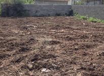 220مترزمین خوش قواره(سندتک برگ)انشعابات در شیپور-عکس کوچک