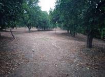 فروش زمین باکاربری باغات 4000 متر در رامسر در شیپور-عکس کوچک