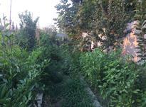 فروش زمین مسکونی 2500 متر در آمل در شیپور-عکس کوچک