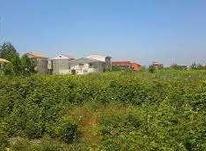 فروش زمین مسکونی 6500 متر در کرکاس عباس آباد در شیپور-عکس کوچک