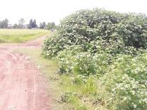 فروش زمین 6000 متری در چاف و چمخاله در شیپور