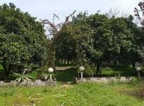فروش زمین مسکونی 3300 متر در سلمان شهر در شیپور-عکس کوچک