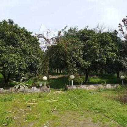 فروش زمین مسکونی 3300 متر در سلمان شهر در گروه خرید و فروش املاک در مازندران در شیپور-عکس1