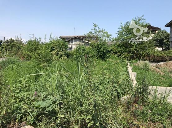 فروش ویژه زمین مسکونی 242 متر در نشتارود در گروه خرید و فروش املاک در مازندران در شیپور-عکس2