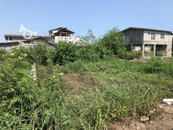 فروش ویژه زمین مسکونی 242 متر در نشتارود در گروه خرید و فروش املاک در مازندران در شیپور-عکس3