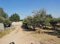 فروش زمین کشاورزی 500 متر در دماوند در شیپور-عکس کوچک