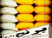 برنج زارع ، طارم هاشمی ، طارم محلی اعلا ،  شیرودی در شیپور-عکس کوچک