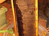 فروش عسل کاملا طبیعی در شیپور-عکس کوچک