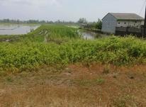 فروش زمین مسکونی 5000 متر در لنگرود در شیپور-عکس کوچک
