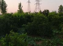 فروش زمین کشاورزی 1000 متر در جاده کیاکلا و قائمشهر در شیپور-عکس کوچک