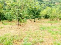 فروش ویژه قطعه زمین باویو360درجه کوه ودریادر رامسر در شیپور-عکس کوچک