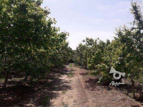 فروش زمین کشاورزی 300 متر در شهریار در گروه خرید و فروش املاک در تهران در شیپور-عکس1