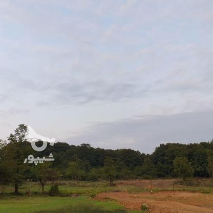 3 هکتار مترزمین مسطح در تموشل در گروه خرید و فروش املاک در گیلان در شیپور-عکس1