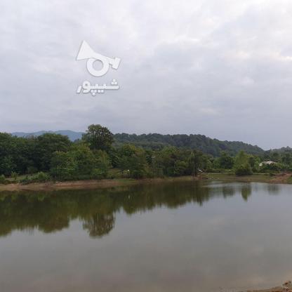 3 هکتار مترزمین مسطح در تموشل در گروه خرید و فروش املاک در گیلان در شیپور-عکس2